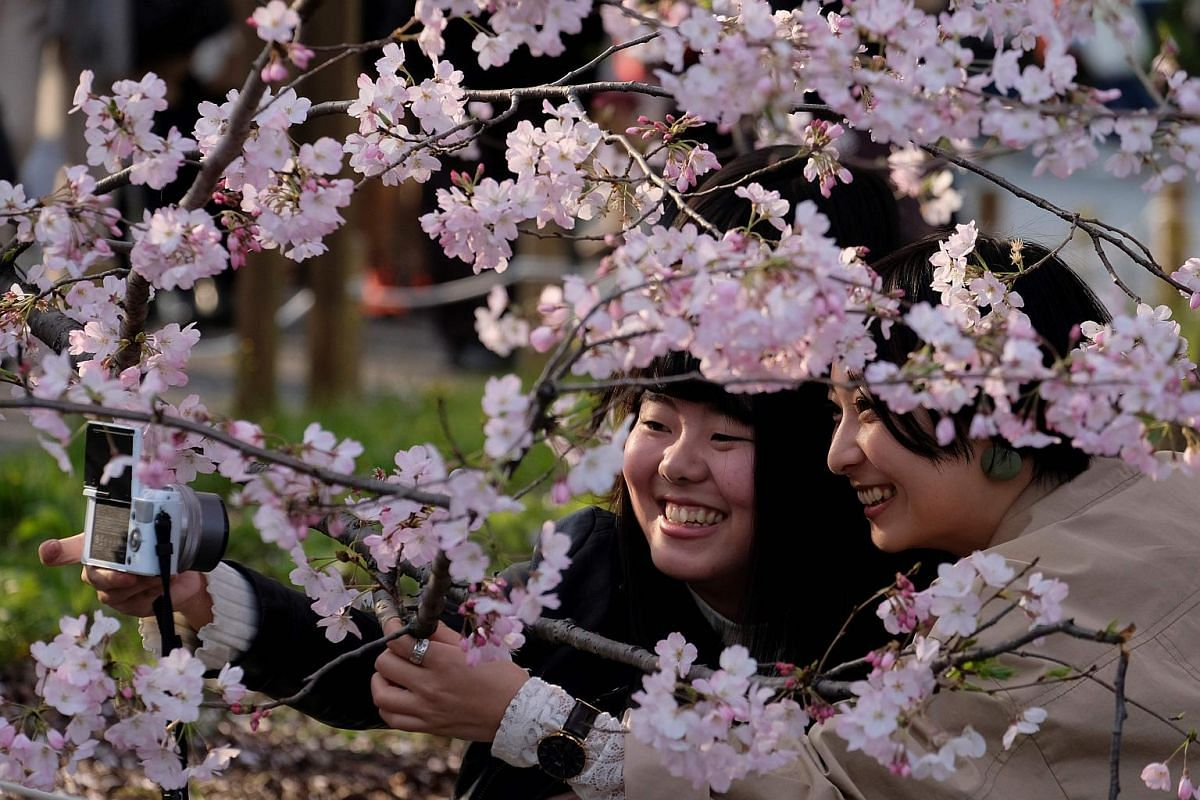 Pedestrians take pictures with cherry blossoms in Tokyo on March 27, 2019.