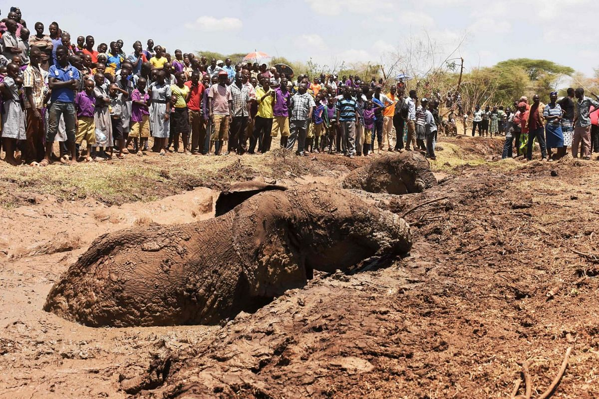 People watch as two of three elephants stuck in deep mud on the shores of the seasonal Lake Kapnarok, situated at the base of the Kerio valley, part of the Kenyan Rift Valley's ecosystem in Baringo County, are rescued on April 1, 2019.  PHOTO: AFP