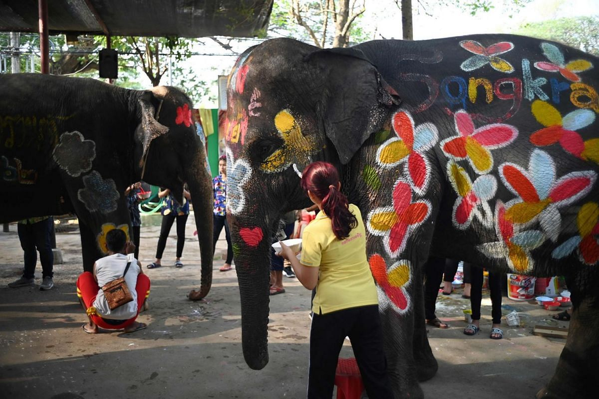 People paint elephants before a ceremony to celebrate the Buddhist New Year, locally known as Songkran, in Ayutthaya on April 11, 2019. PHOTO: AFP