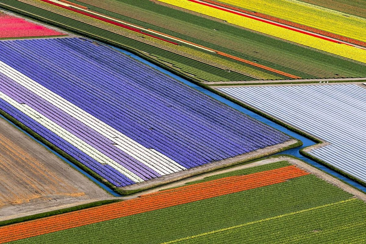 An aerial view of the flower fields of the Keukenhof in Lisse, The Netherlands, April 10, 2019. PHOTO: EPA-EFE