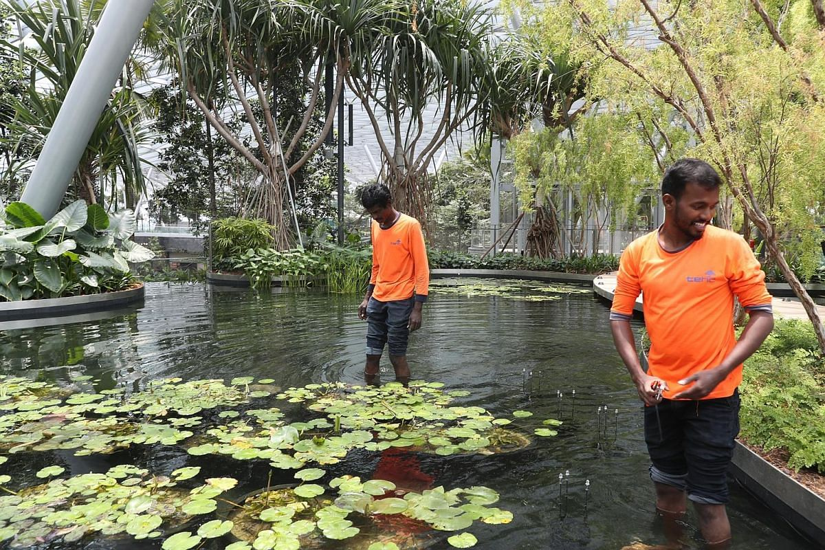 Senior executive Alex Foo (left), 30, and executive Mohamed Foheer Mohamed Fazlullah, 29, from Jewel's user experience team, checking pumps in the control room for the Rain Vortex waterfall. Workers planting and pruning in the pond at Canopy Park. Th