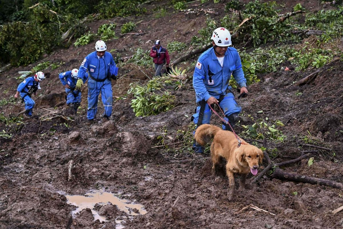 Colombian Red Cross member Manuel Bermudez (right) and his dog Gretta search for victims after a landslide in Rosas.