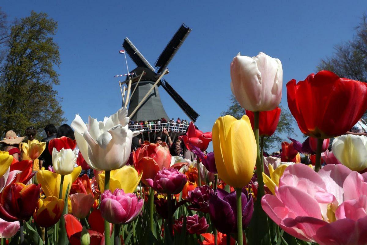 A windmill is seen in the Keukenhof garden in Lisse, Netherlands, on April 19, 2019.