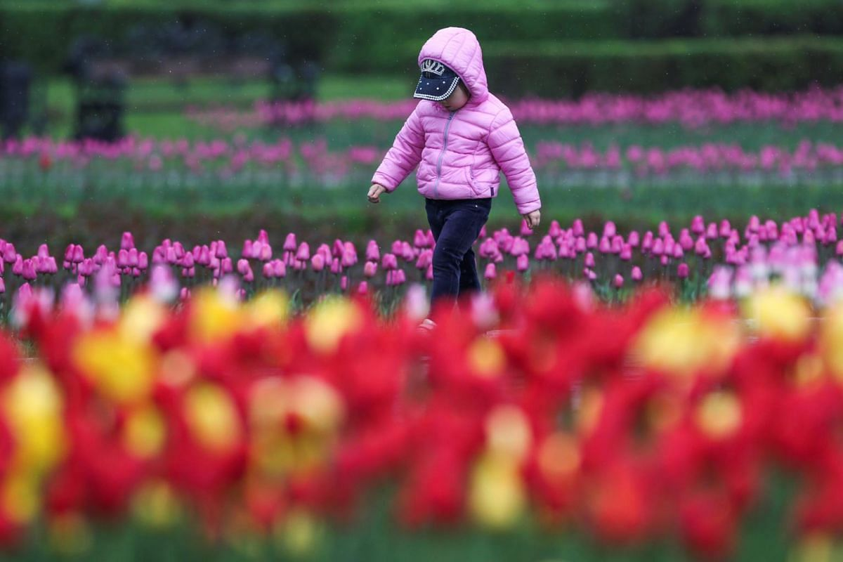 A child walks amid tulips in a park in the city of Almaty, Kazakhstan, on April 16, 2019.