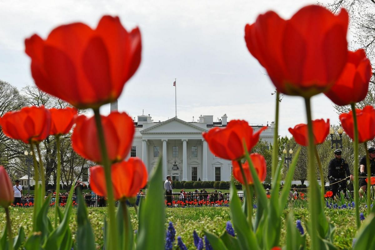 Tulips are seen at Lafayette Square across from the White House in Washington, on April 8, 2019.