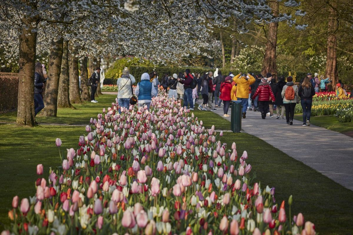 Tulips at the Keukenhof garden's annual exhibit of bulbs in Lisse, Netherlands, on April 14, 2019.