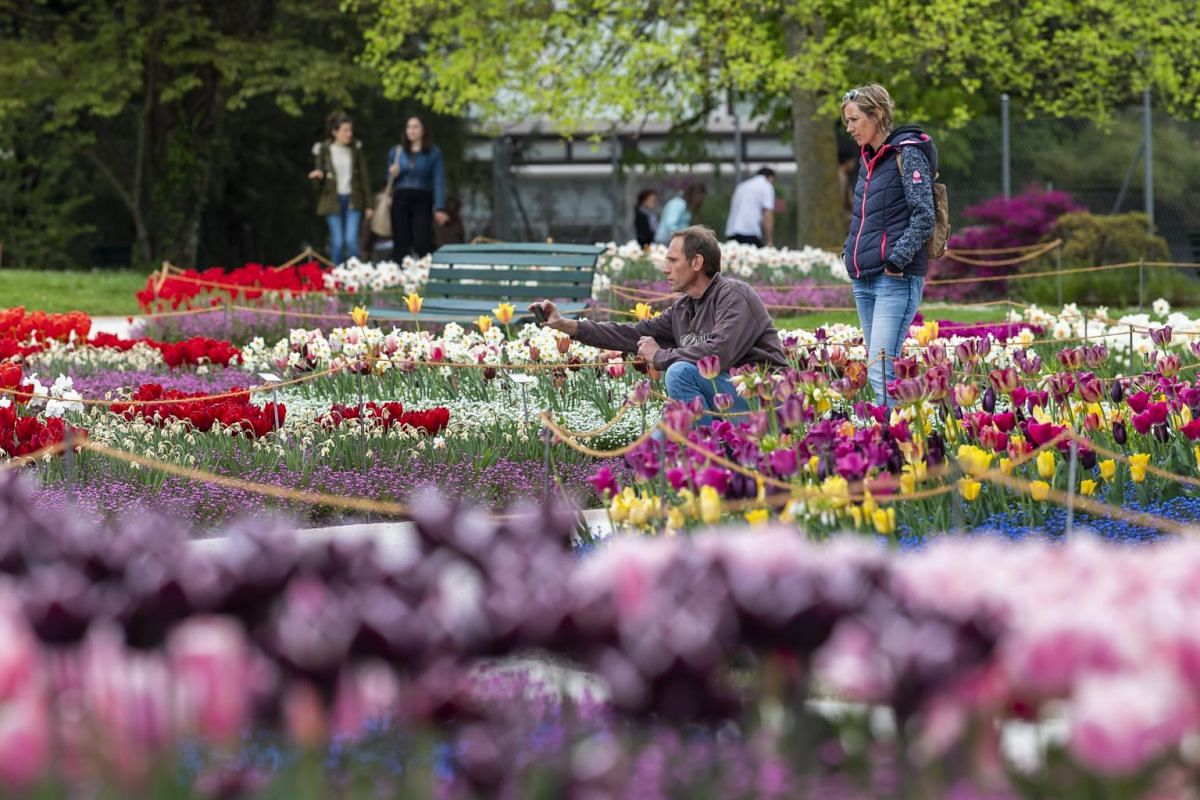 Tulips and other flowers are in full bloom in the botanical garden of Geneva, Switzerland, on April 21, 2019.