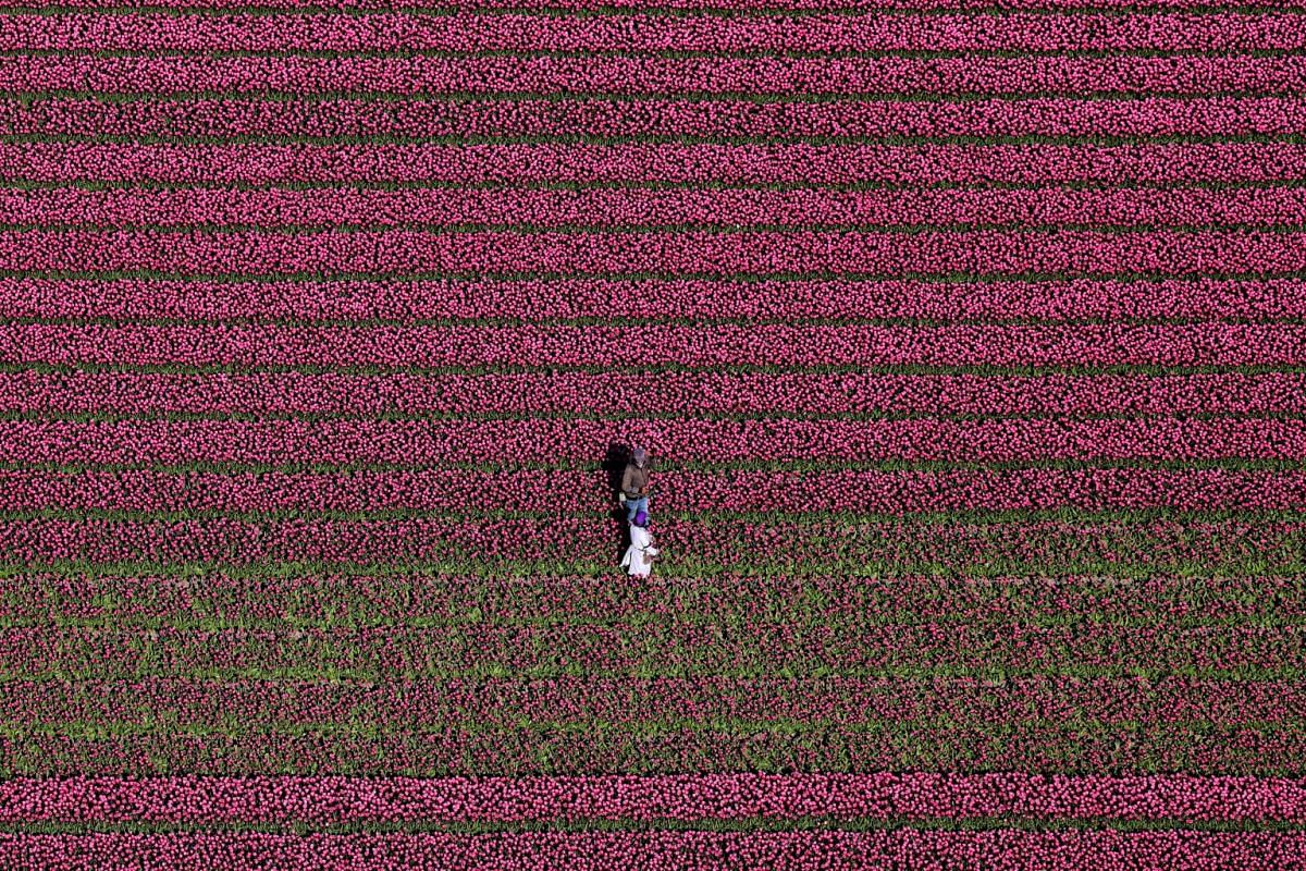 An aerial view of tulip fields near the city of Creil, Netherlands, on April 18, 2019.
