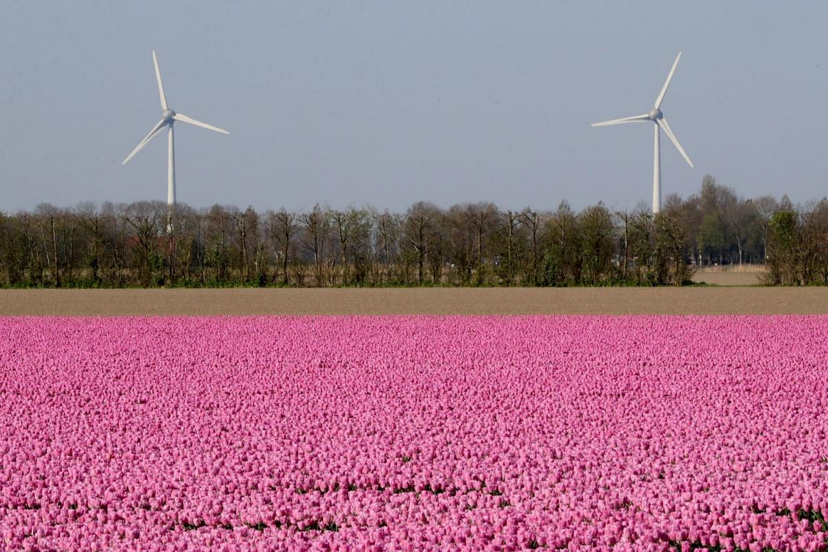 A tulip field is seen near the city of Creil, Netherlands, on April 19, 2019.