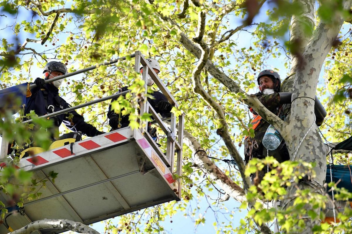 Police officers use a platform to reach a climate change activist who locked his hands around the trunk of a tree at Parliament Square in London, on April 24, 2019, the 10th day of the group's protest calling for political change to combat climate ch