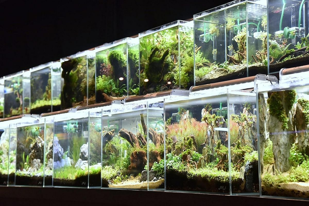 The SGF Horticulture Show's aquascaping section includes displays by master aquascapers and ornamental fish companies as well as tanks in the Nano Tank Aquascaping Competition (above).