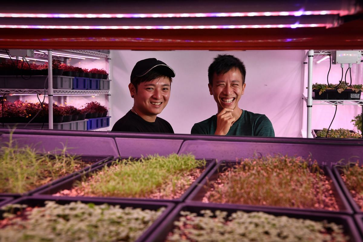 Citizen Farm's deputy head of farm Sidney Chua (left) and head of farm Darren Ho at one of the indoor plots of the farm, which grows both local and non-native vegetables.