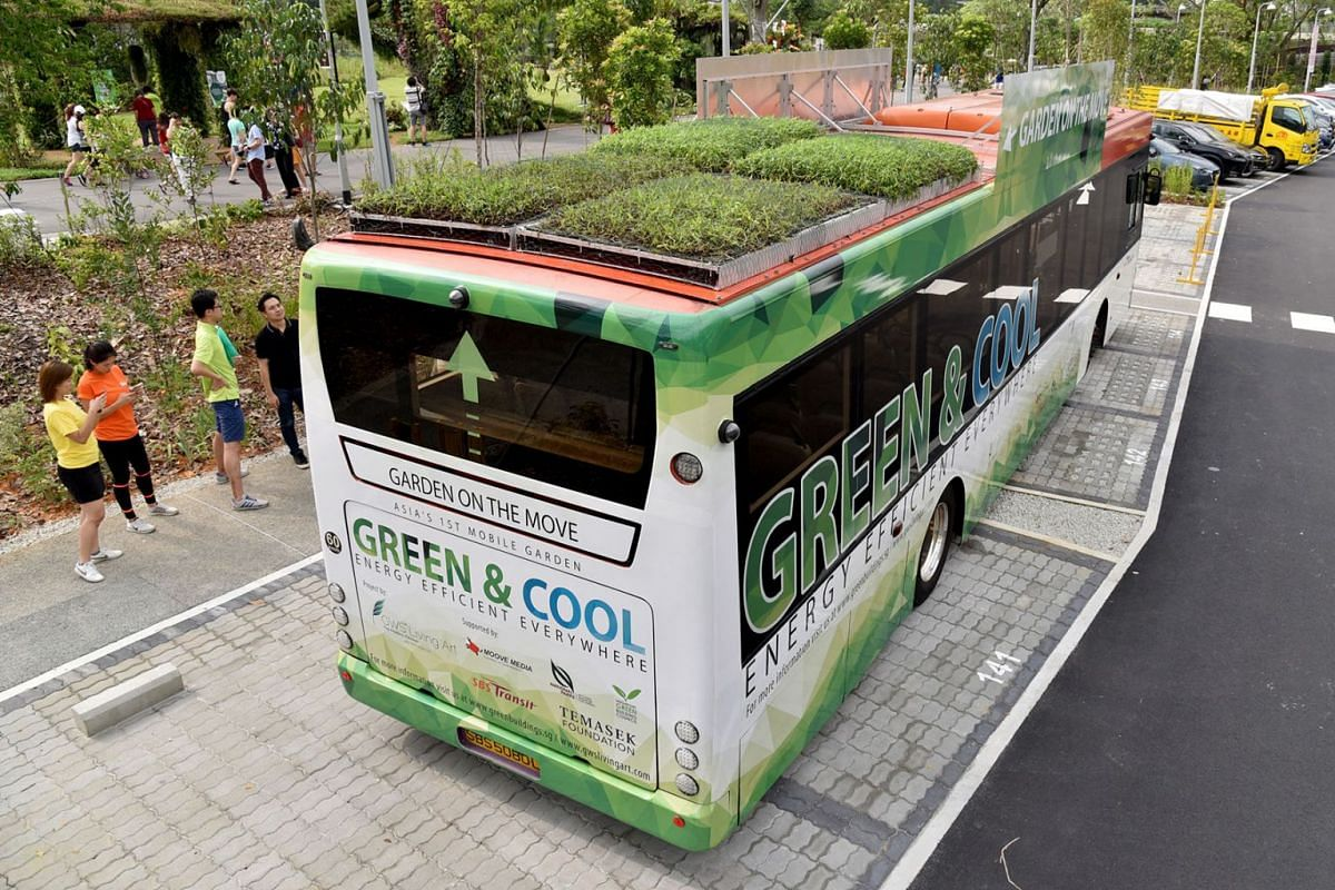 Singapore's first public buses with plants on top hit the road on May 5, 2019. The initiative by urban greenery specialist GWS Living Art is part of a three-month study to see whether the green roofs can lower temperature inside buses and save on f