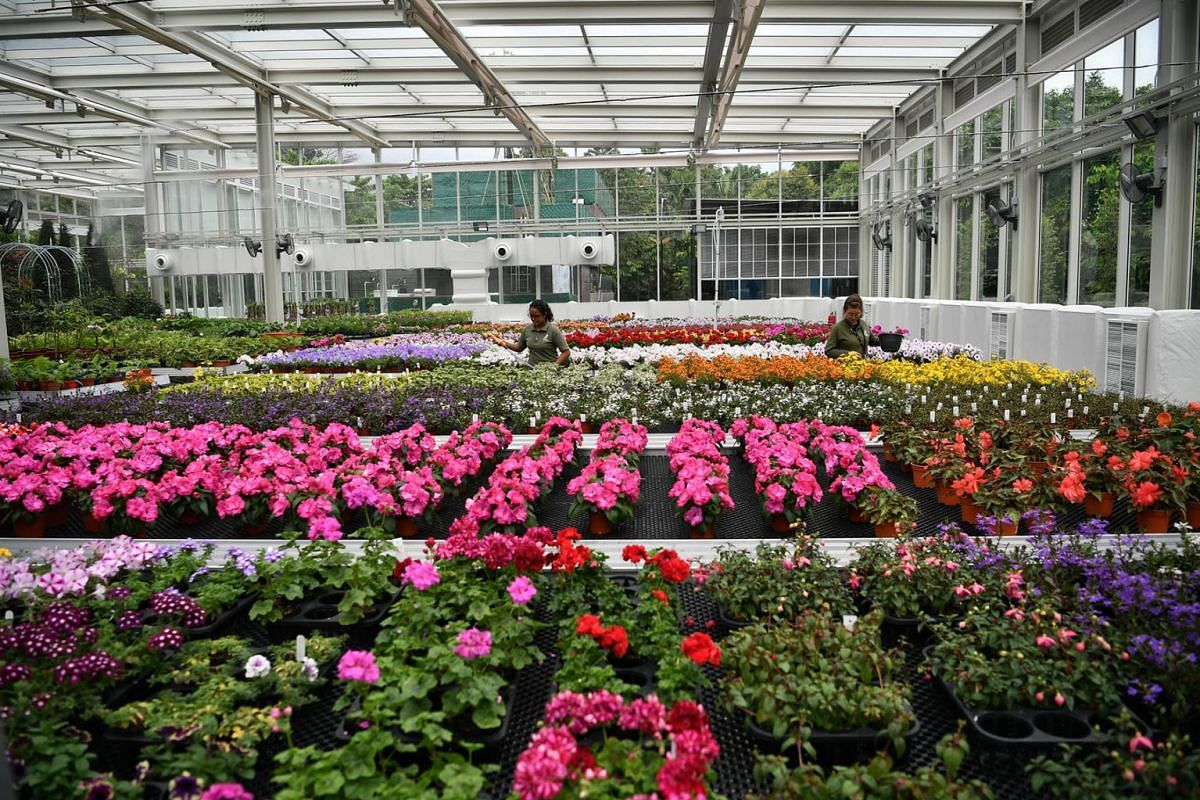 Gardens by the Bay recently opened its latest support biome, a cooled glasshouse in which plants are grown for displays, May 13, 2019. PHOTO: THE STRAITS TIMES/ARIFFIN JAMAR