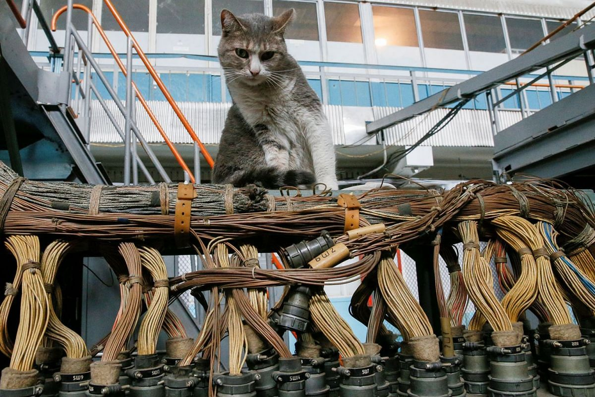 A cat sits inside a flight test facility at the Antonov aircraft plant in Kiev, Ukraine May 15, 2019. PHOTO: REUTERS