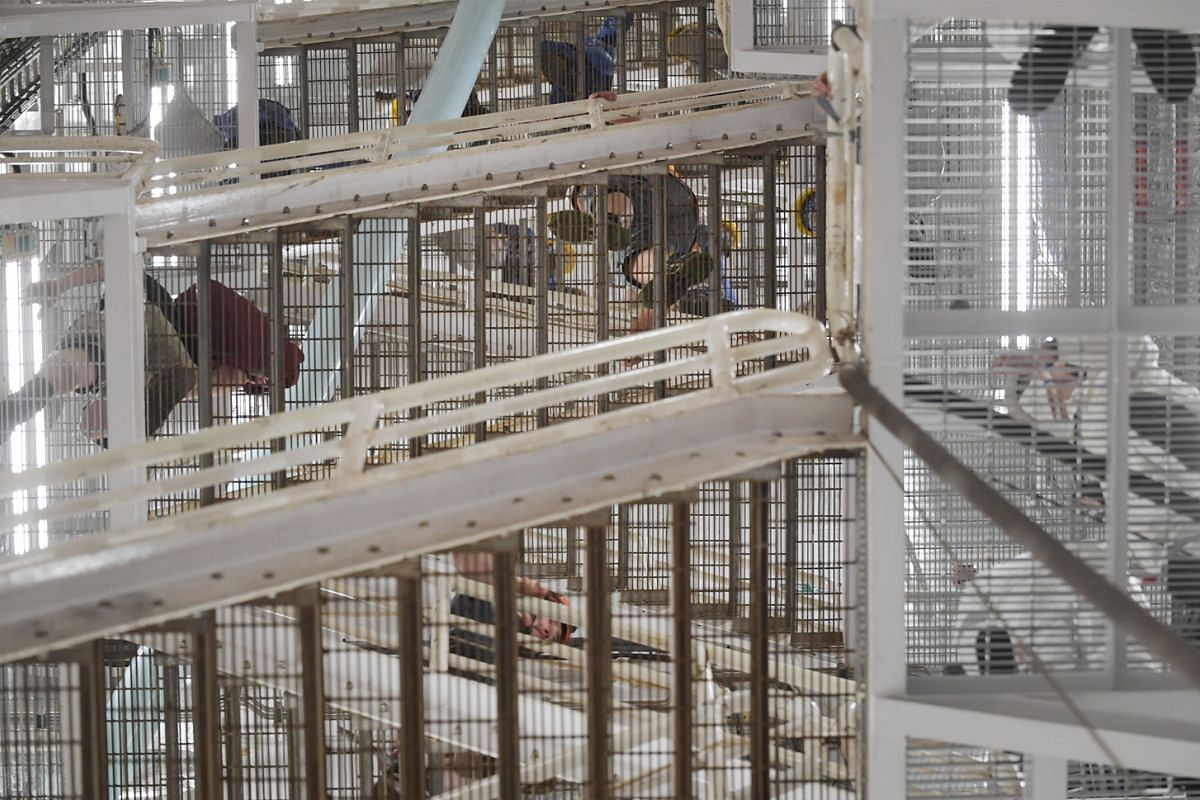 Within each of the eight column legs is a staircase that spans the distance between the pontoons and the deck high above the water.