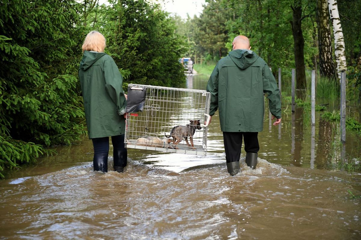 Workers carry a cage with a dog on a flooded street during an animal shelter evacuation after heavy rainfalls in Wadowice Gorne, southern Poland, May 22, 2019. PHOTO: EPA-EFE