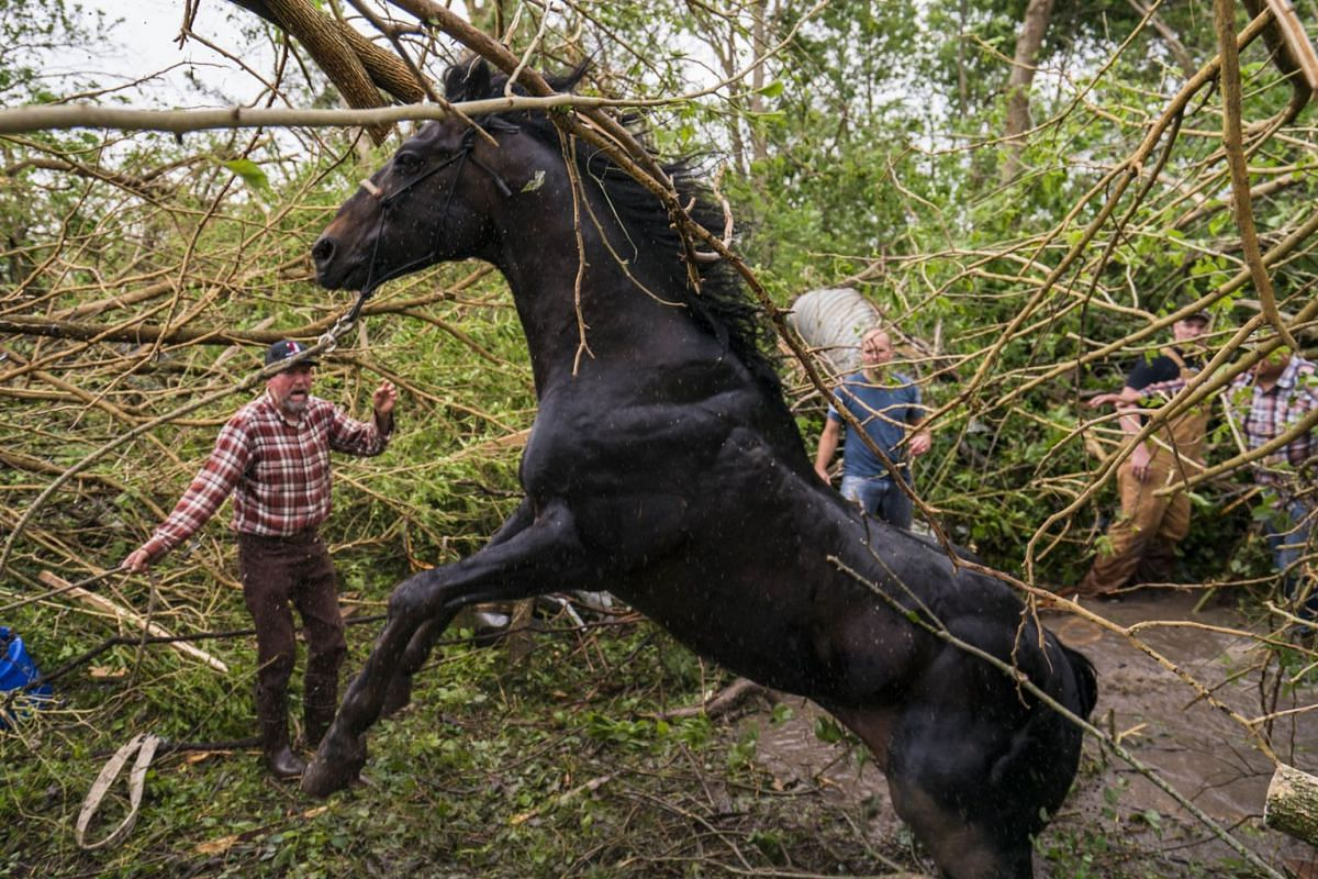 Family and neighbors work together with support from first responders to free a horse from a pool of water and mud in dense trees on May 29, 2019 in Linwood, Kansas. Owner Javier Campos suspects the tornado picked the horse up and carried it nearly t