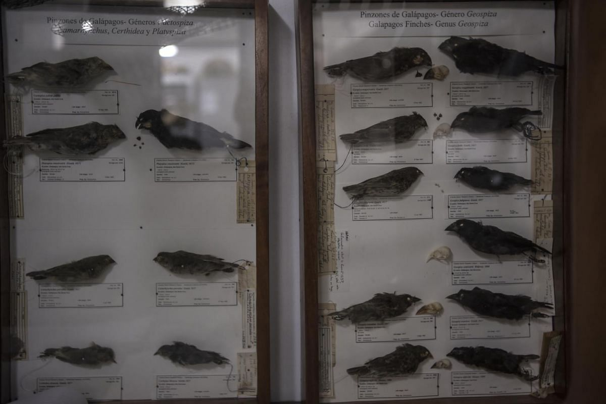 Casings showing 18 kinds of finches at the Charles Darwin Research Station on Santa Cruz in the Galapagos Islands.