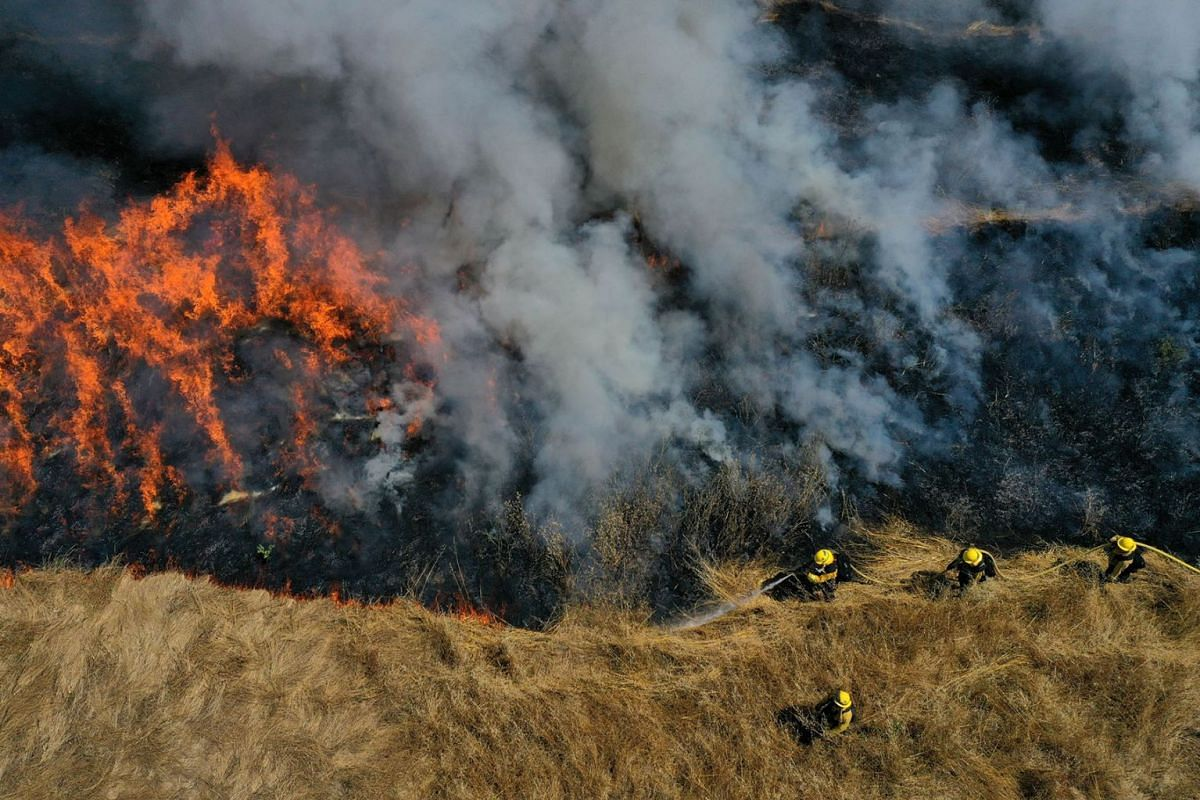 Marin County Fire Department firefighters participate in a controlled burn training on June 19, 2019 in San Rafael, California. PHOTO: GETTY IMAGES/AFP