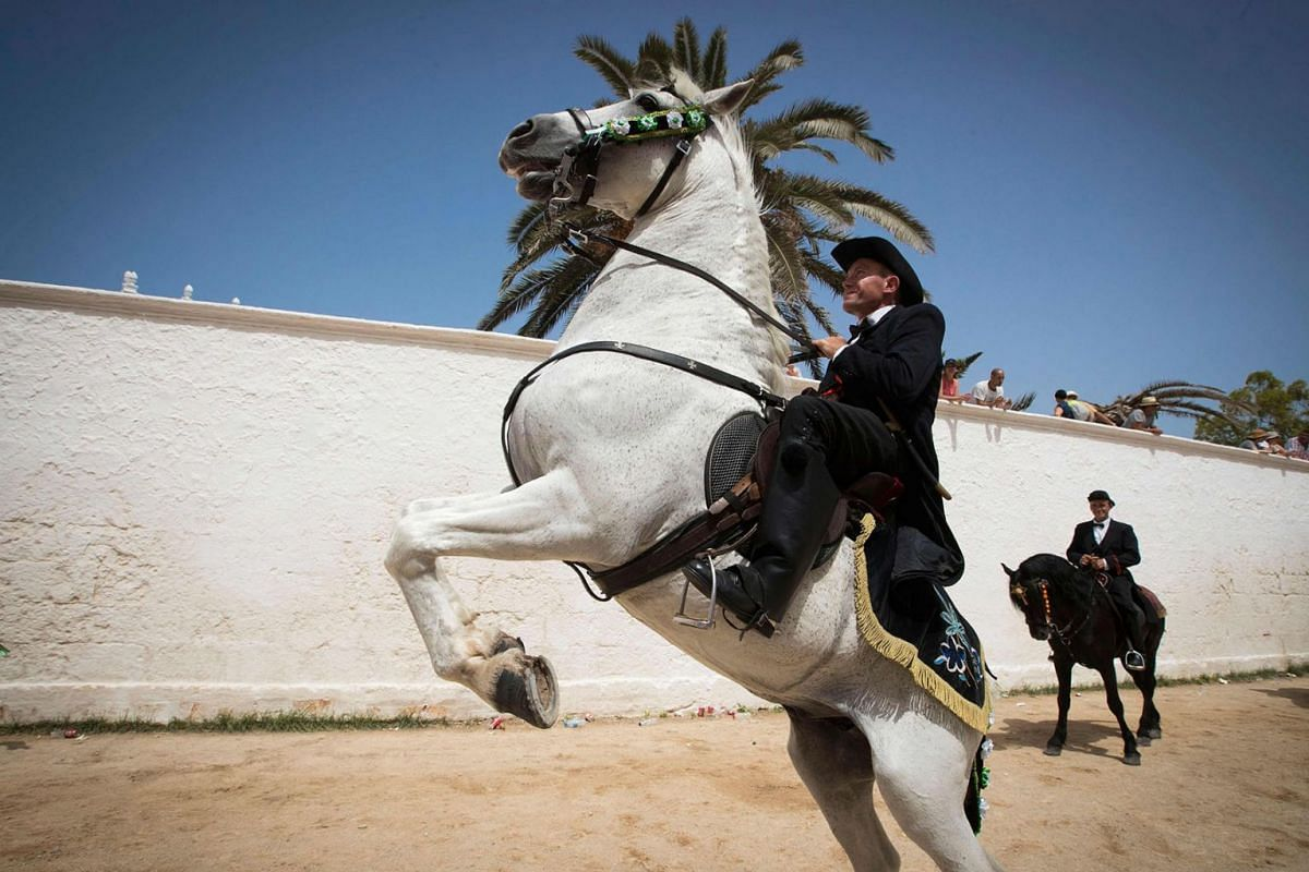 """A horse rears during the """"Caragol des Born"""", a mass gathering of horses and people swirling to the rythm of the music during the traditional Sant Joan (Saint John) festival in the town of Ciutadella, on the Balearic Island of Minorca, on the eve of S"""
