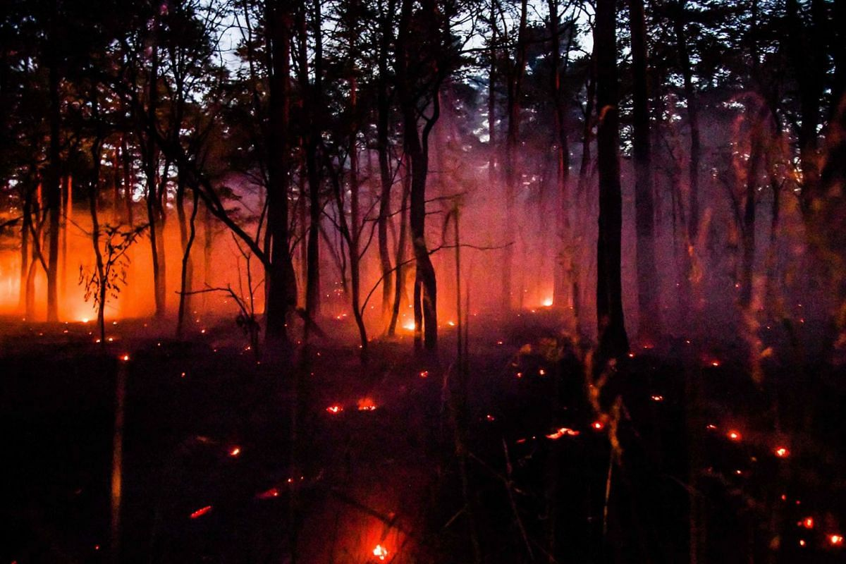 A photo taken on June 26, 2019 shows a forest fire in Ziltendorf near Frankfurt an der Oder, northeastern Germany, close to the border with Poland. PHOTO: DPA VIA AFP