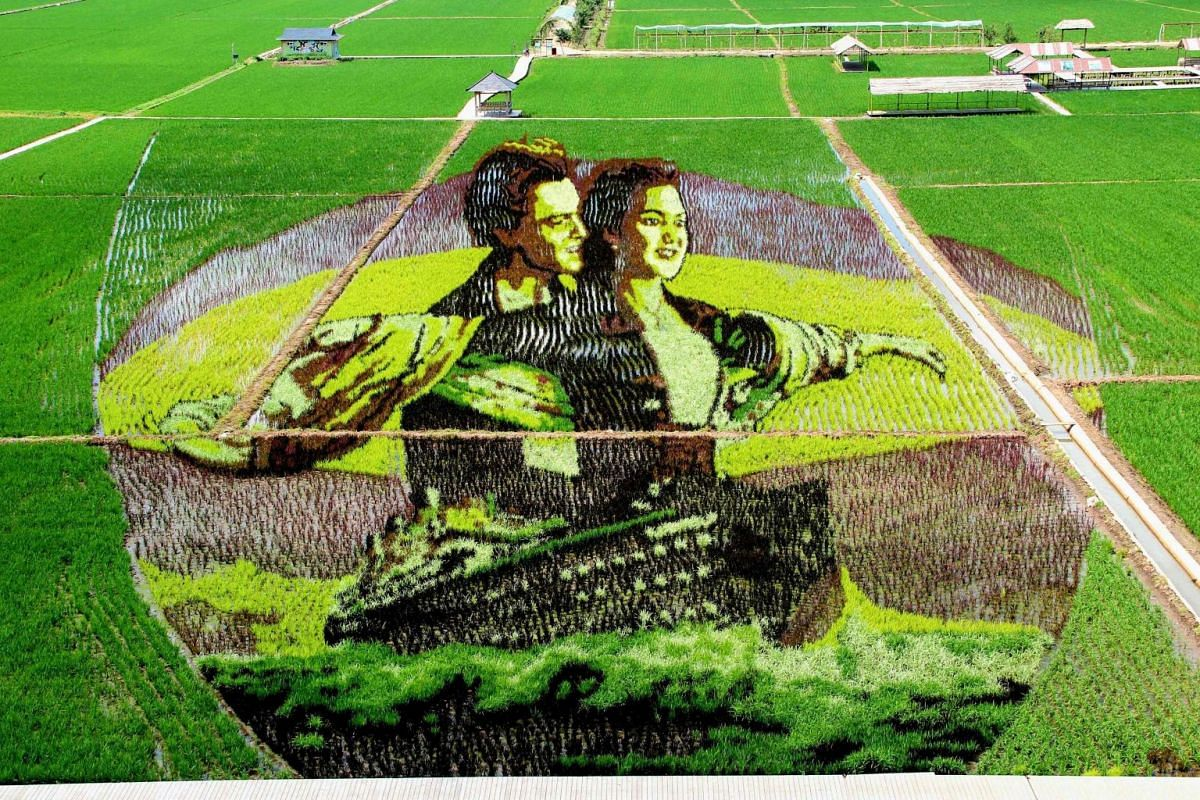 An image from the film Titanic created using different varieties of rice in a paddy field in Shenyang, China, on June 30, 2019.
