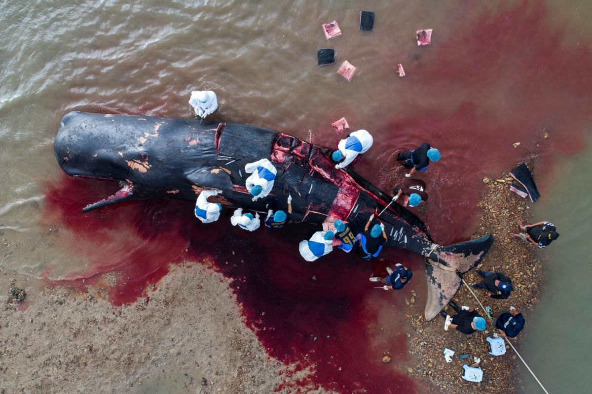 Veterinarians performing an autopsy on a dead sperm whale at Lanta island in Krabi province, Thailand, on July 3, 2019.