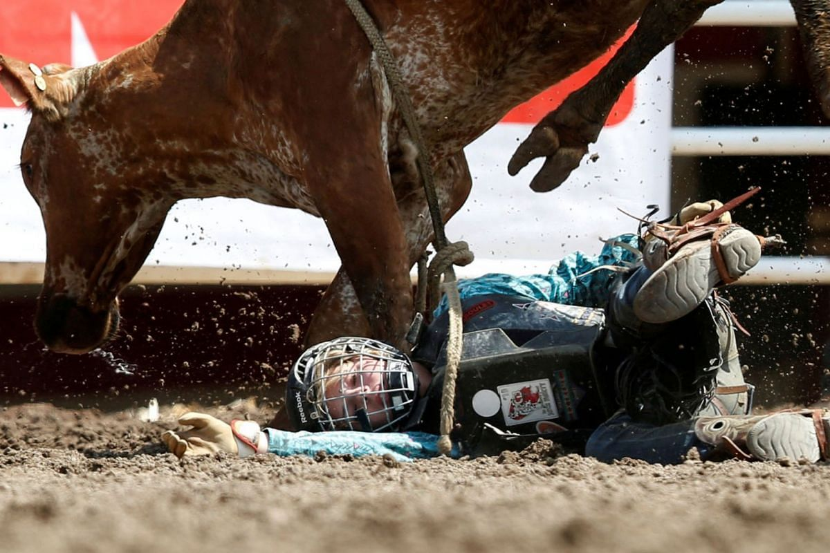 Tyla Thue of Bengough, Saskatchewan gets stepped on by the steer she was riding in the junior steer riding event during the Calgary Stampede rodeo in Calgary, Alberta, Canada July 6, 2019. PHOTO: REUTERS
