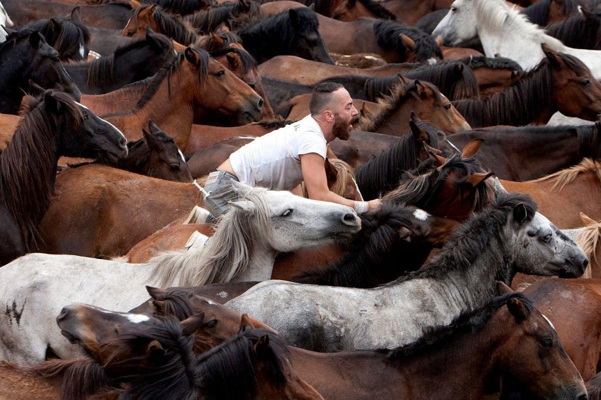 A man takes part in the traditional Rapa das Bestas festival in Sabucedo, Galicia, Spain, on July 7, 2019.