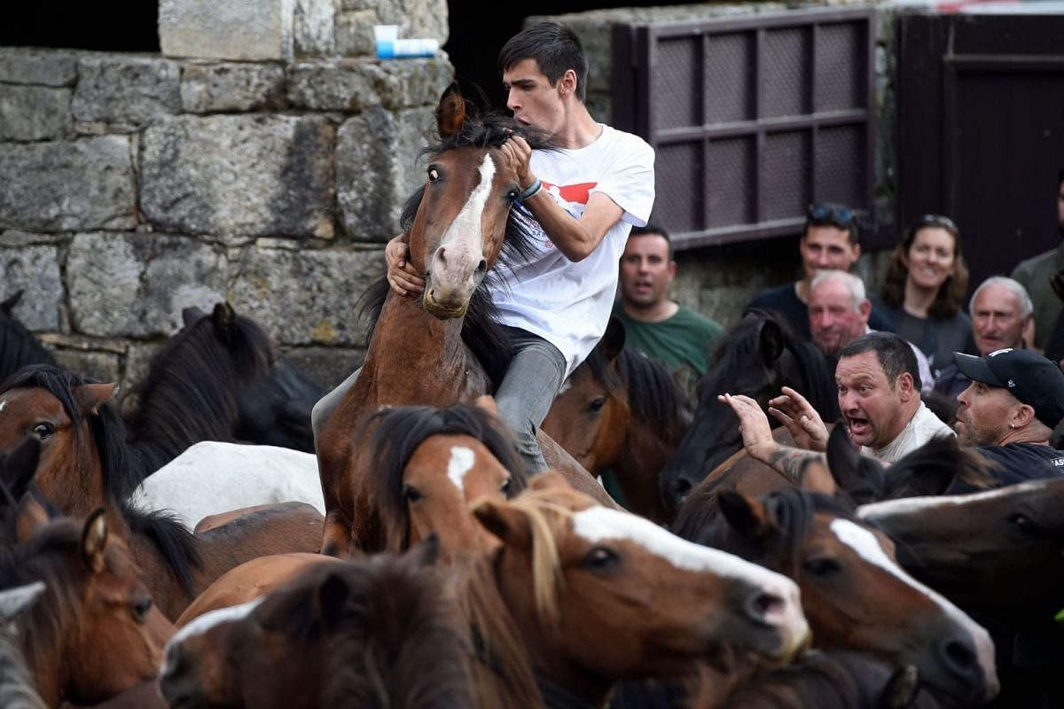 """An aloitador struggles with a wild horse in the """"curro"""" (arena) during the Rapa das Bestas traditional event in the village of Sabucedo, some 40km from Santiago de Compostela, northwestern Spain, on July 6, 2019."""