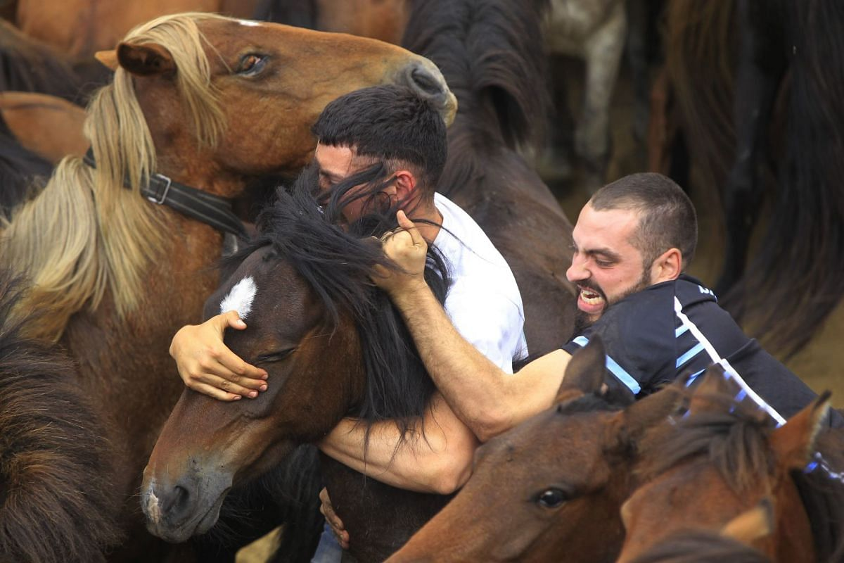 Men try to ride wild horses during the traditional event Rapa das Bestas, which takes place on the first weekend of July for four days, on July 7, 2019.