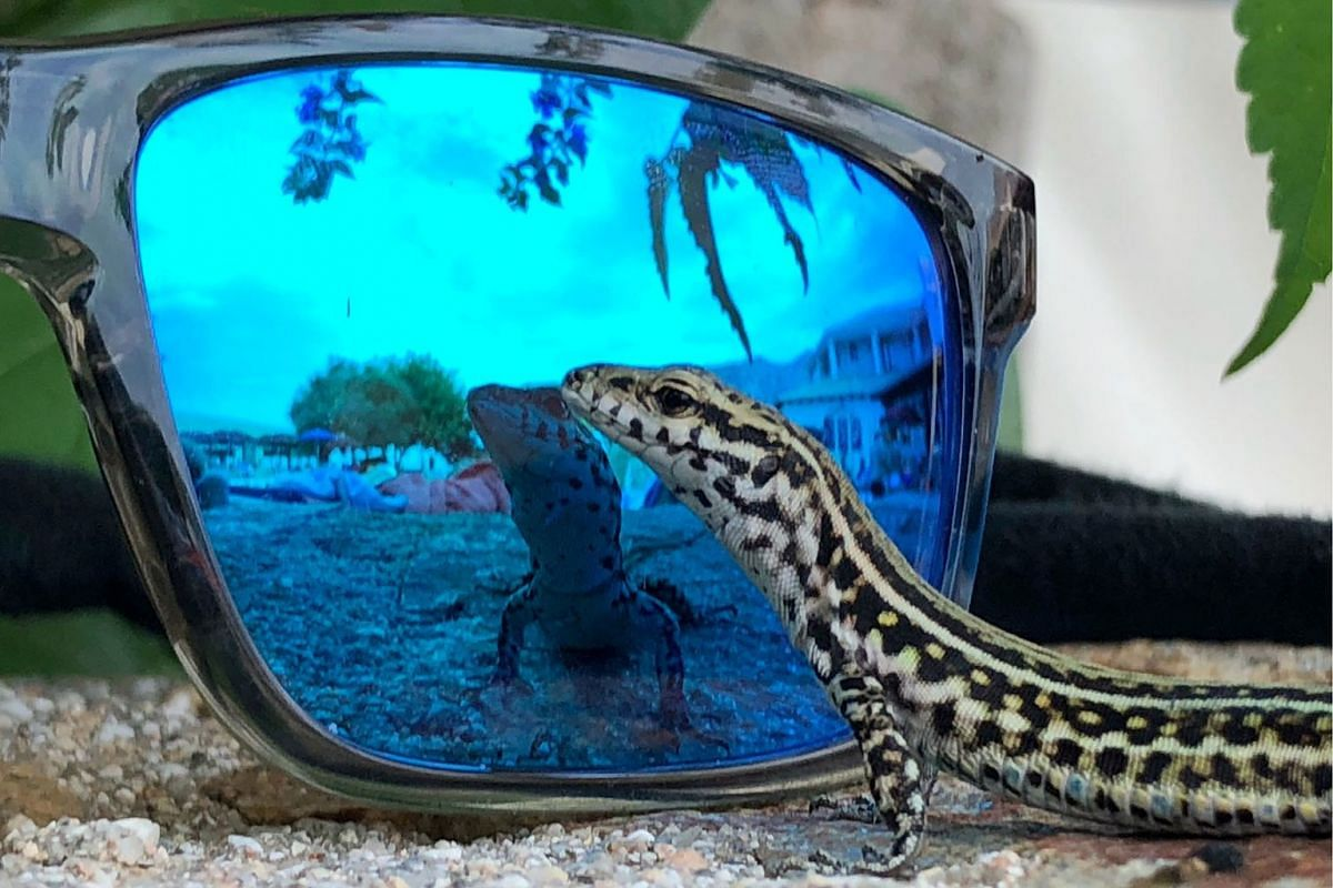 A lizard reflects on sunglasses in Cala Gonone, Sardinia, Italy July 8, 2019. PHOTO: REUTERS