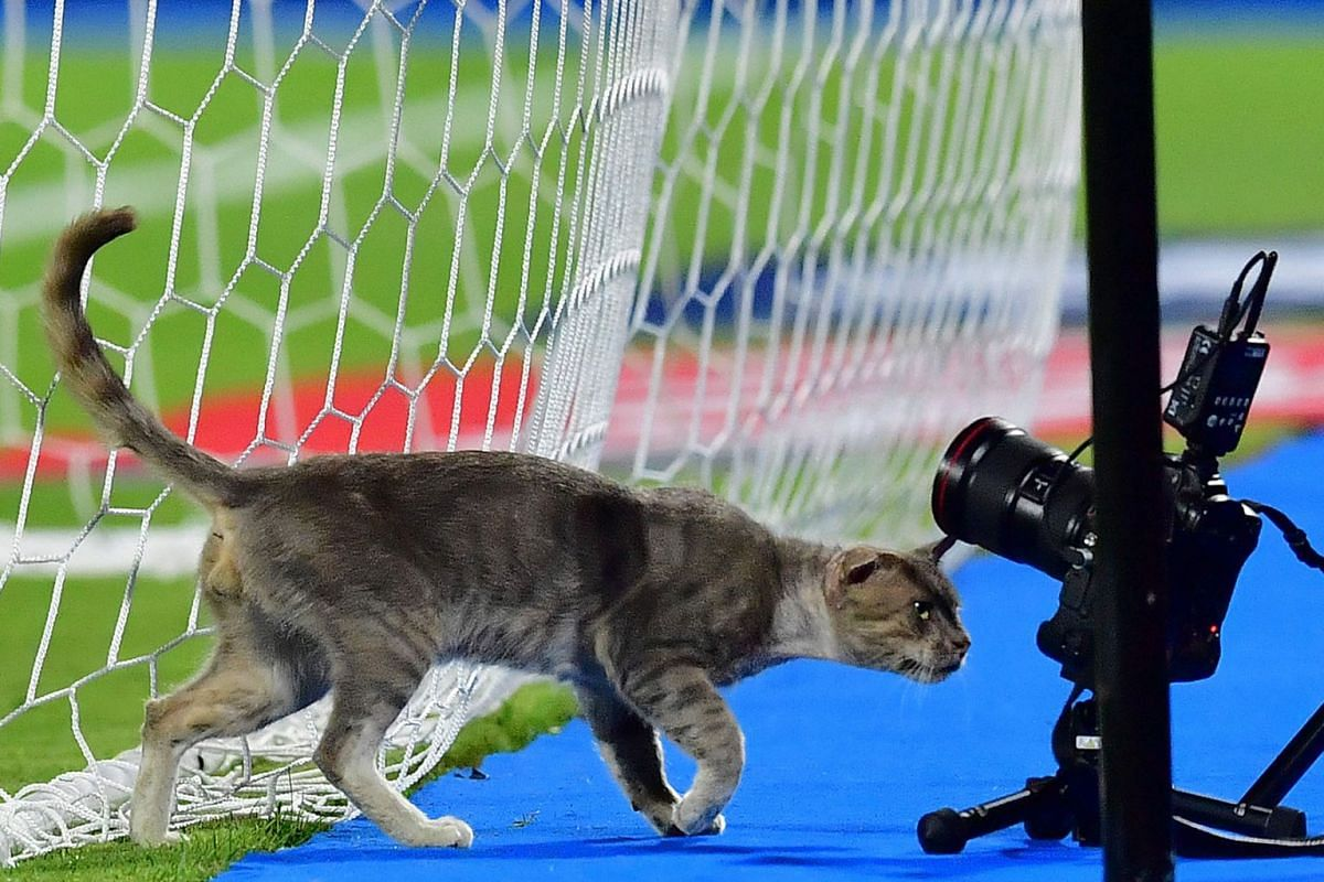 A cat inspect the remote cameras during the 2019 Africa Cup of Nations (CAN) Round of 16 football match between Ghana and Tunisia at the Ismailia Stadium in the Egyptian city on July 8, 2019. PHOTO: AFP