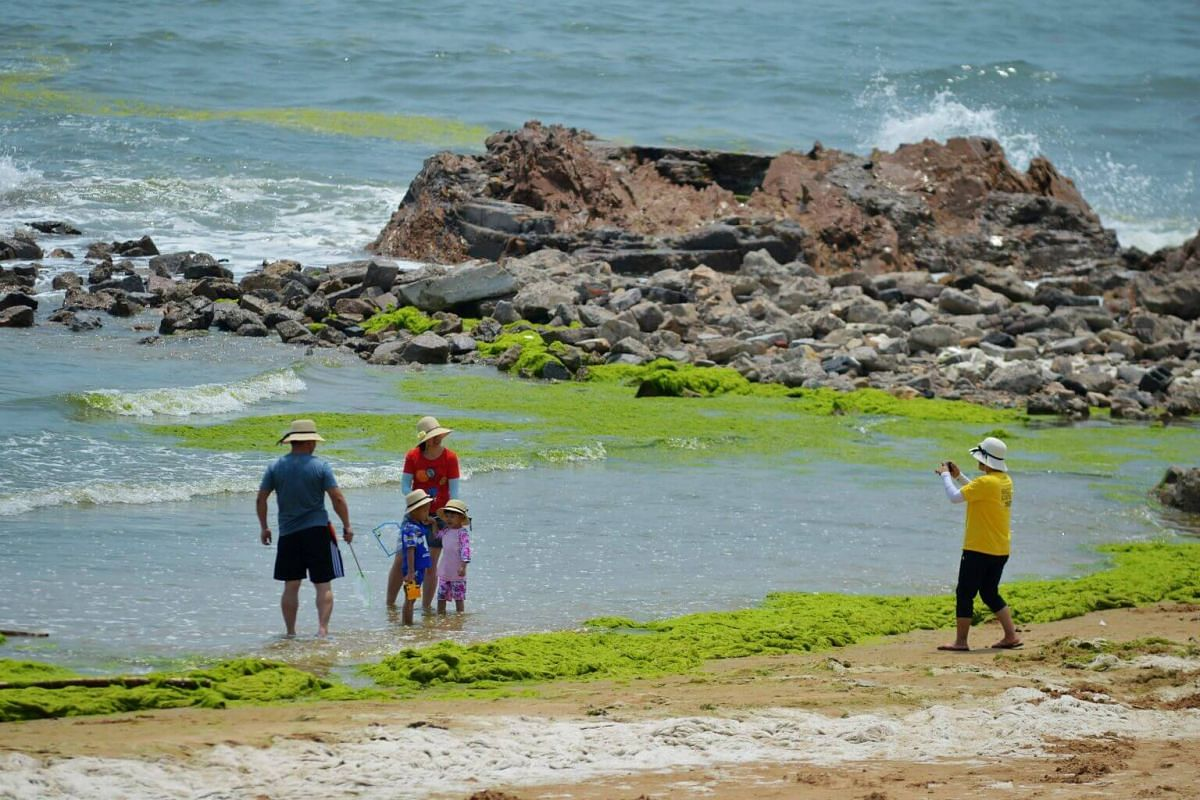 The bright green algae bloom is an annual phenomenon along the Shandong coastline since the first outbreak in 2008.