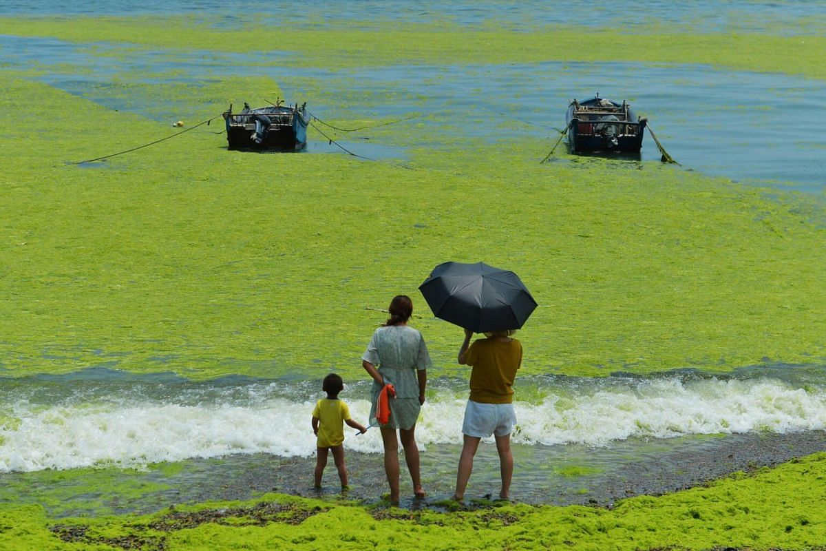 People looking at algae in a bay in Qingdao, on July 11, 2019.