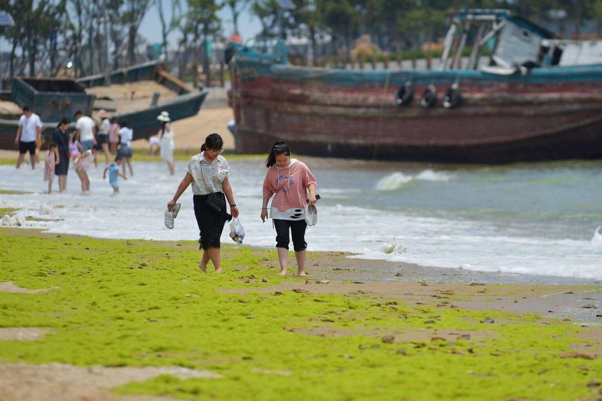 People walking through algae at a beach in Qingdao, on July 11, 2019.