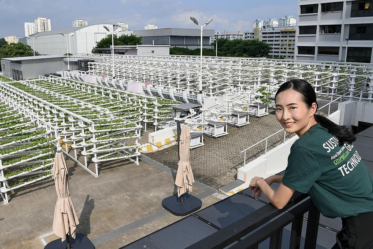 Citiponics co-founder Danielle Chan at the company's farm on the rooftop of an HDB multistorey carpark in Ang Mo Kio Avenue 6. The farm uses a system of fired clay pebble-filled tubings to grow leafy Georgina lettuce without the use of soil. It produ