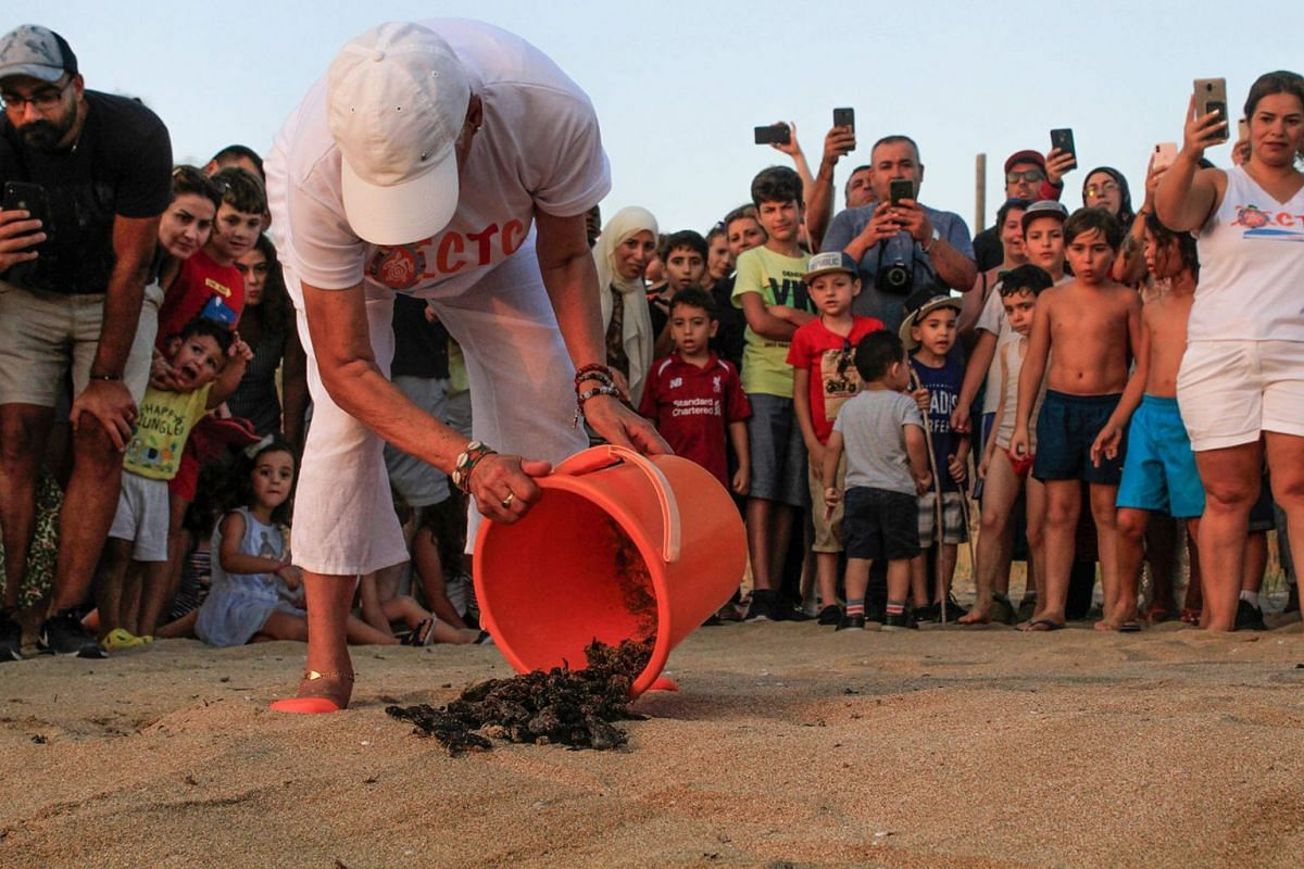 Mona Khalil, a conservation specialist who behind the Orange House Project, releases turtles into the sea at al-Mansouri beach near Lebanon's southern city of Tyre, on July 31, 2019. PHOTO: AFP