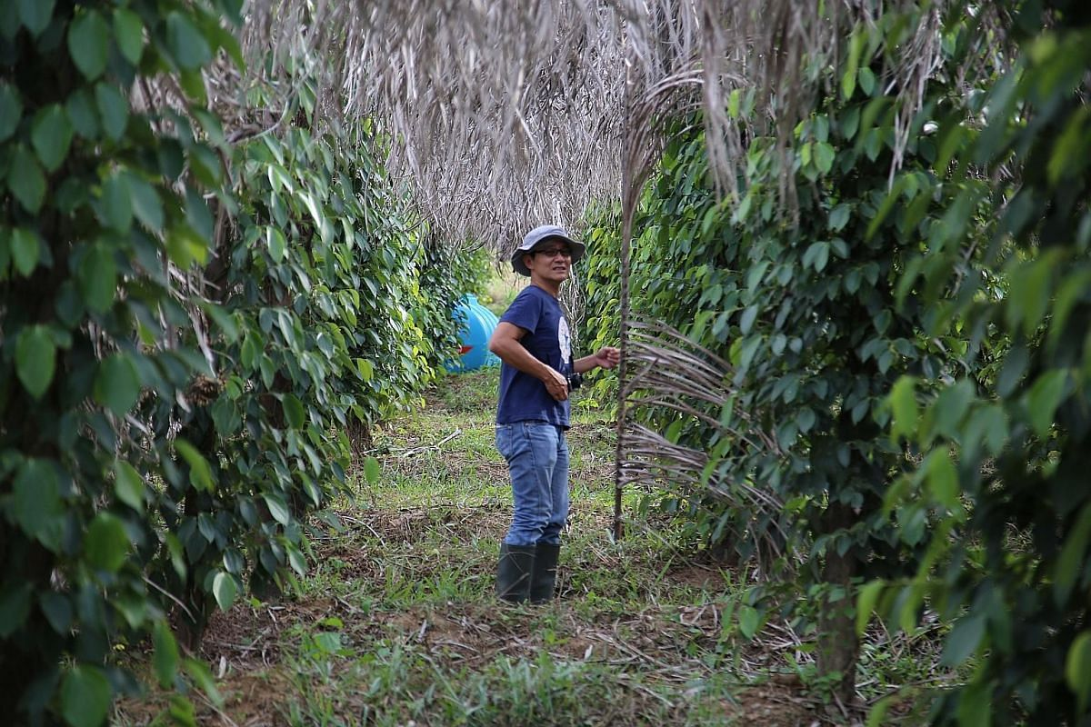 Mr Lai Poon Piau at his Kampot pepper farm in Cambodia. Wickham Olive Grove. At the free-range egg farm that Mr Adrian Chong set up in Johor, the hens are fed a special feed which helps them produce flavourful eggs.