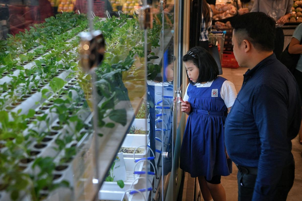 FairPrice's largest FairPrice Xtra hypermarket and Unity Pharmacy outlet at VivoCity features a small indoor hydroponic farm – where vegetables are grown and harvested – by local urban farming firm ComCrop. PHOTO: THE STRAITS TIMES/MARK CHEONG