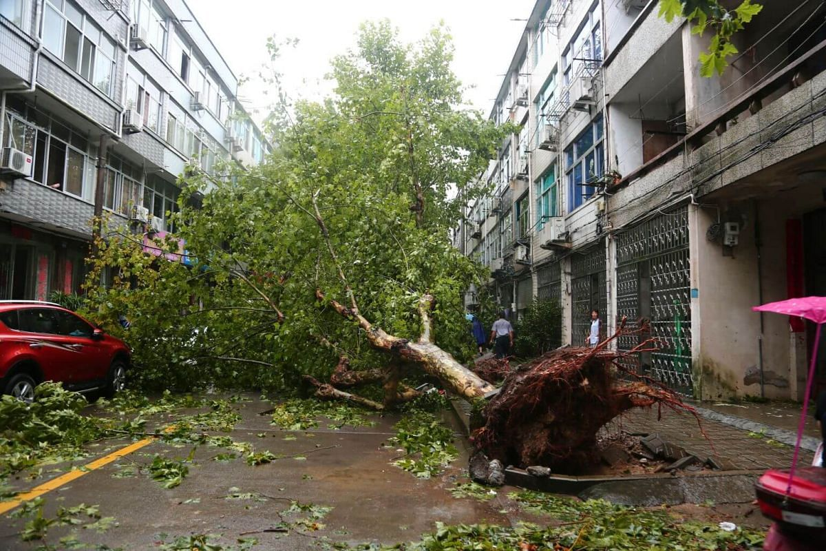 An uprooted tree on a street in Taizhou, Zhejiang province, on Aug 10, 2019.