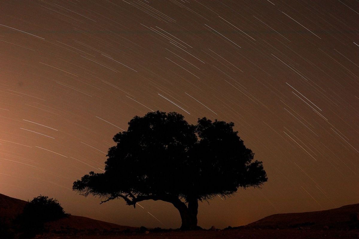 A long exposure shows stars behind a tree during the annual Perseid meteor shower near the town of Mitzpe Ramon, southern Israel, August 13, 2019. PHOTO: REUTERS