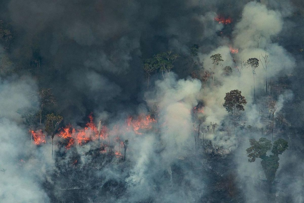 A handout aerial picture released by Greenpeace shows fire raging in the forest in the municipality of Candeias do Jamari, close to Porto Velho in Rondonia state, in the Amazon basin in north-western Brazil, on Aug 24, 2019.