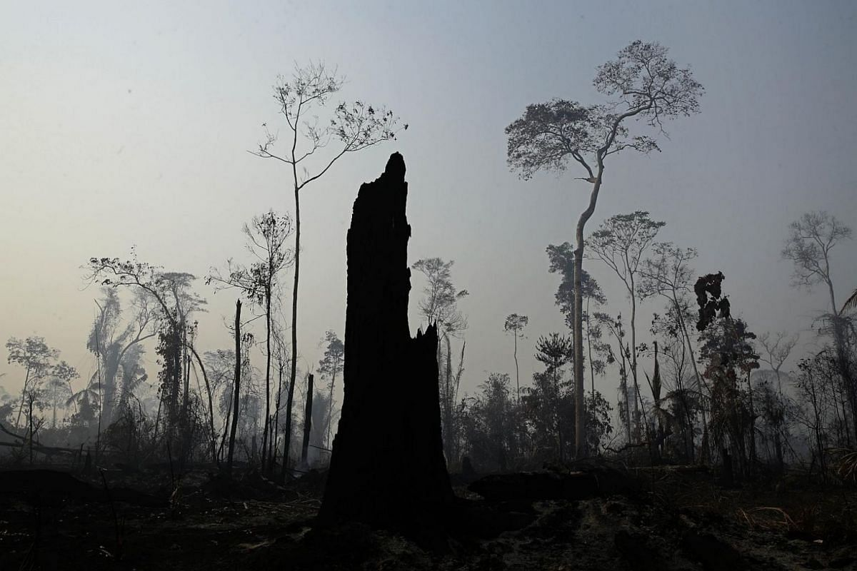 Charred trees stand after a forest fire in the Vila Nova Samuel region, along the road to the Jacunda National Forest near the city of Porto Velho, Rondonia state, part of Brazil's Amazon, on Aug 25, 2019.