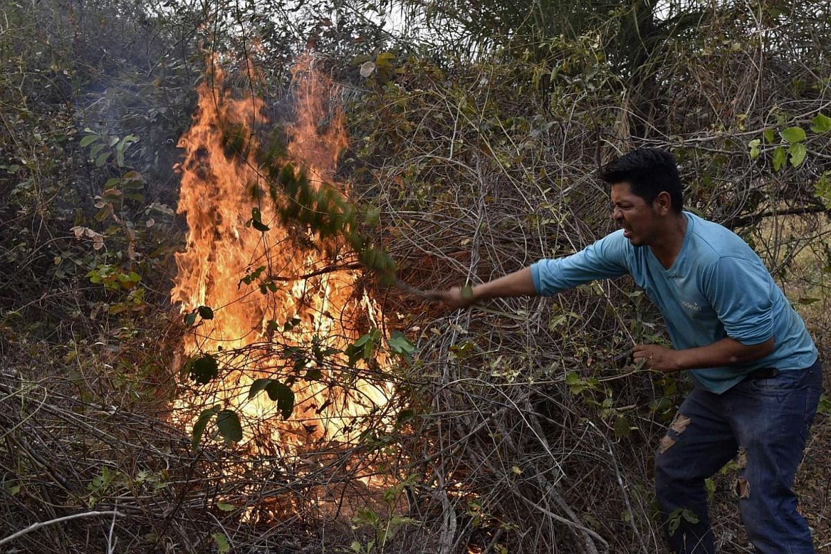 A volunteer tries to put out a fire in the surroundings of Robore in eastern Bolivia, on Aug 25, 2019.