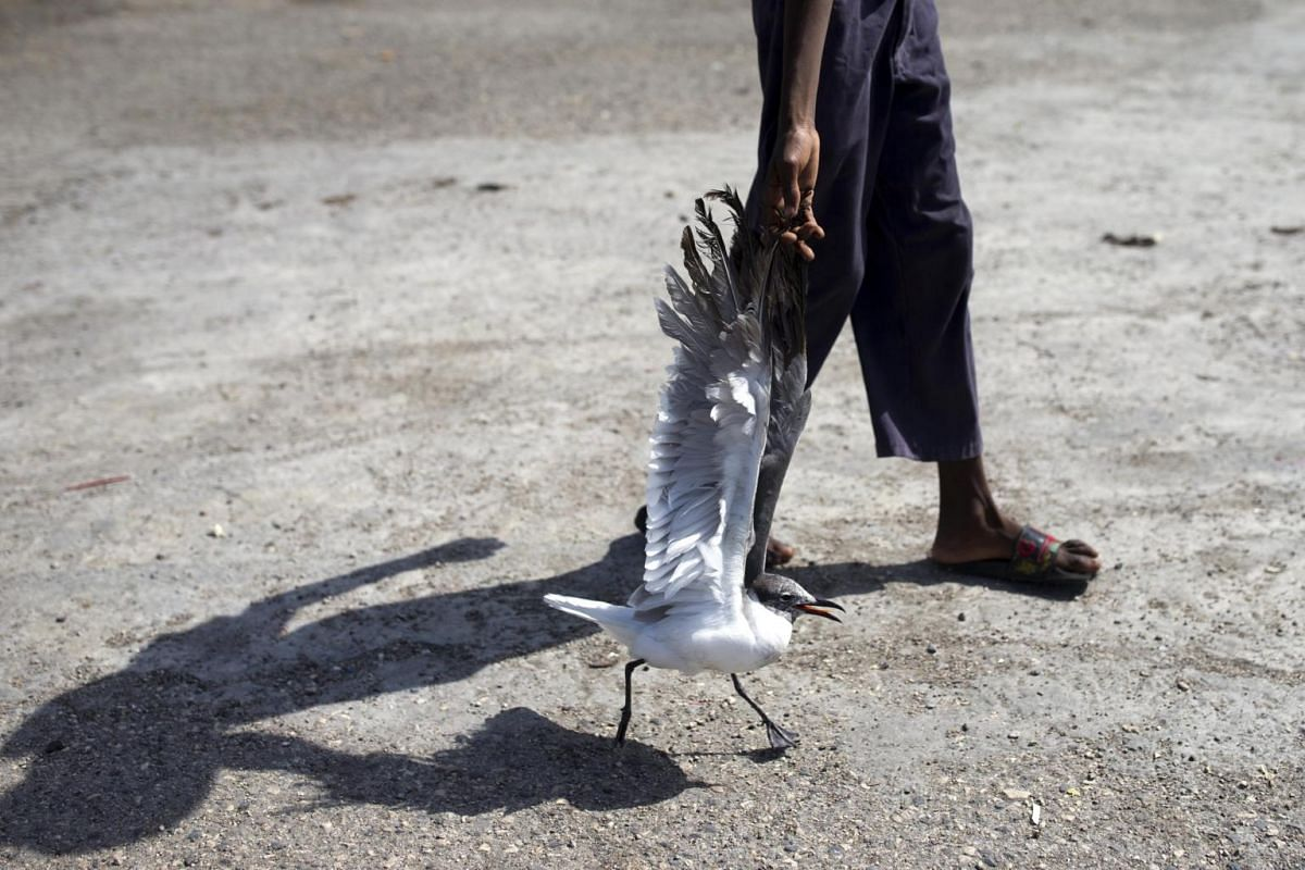 A youngster holds the wing of a seabird locally known as a Fou as he walks it home in the Cite Soleil neighbourhood in Port-au-Prince, Haiti, on Aug 27, 2019.