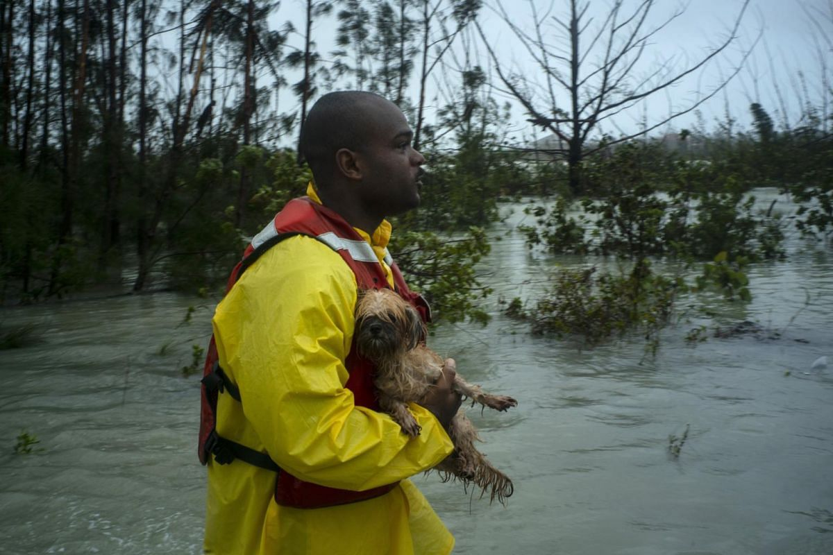 A volunteer looks for the owner of a dog he rescued from the rising waters of Hurricane Dorian on a flooded road near the Causarina bridge in Freeport, Grand Bahama, Bahamas, on Sept 3, 2019.
