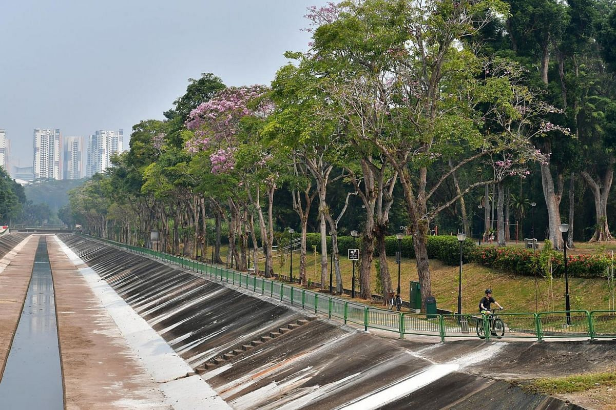 Trees flowering amidst the heat and the haze at Ulu Pandan Road, on Sept 13, 2019.