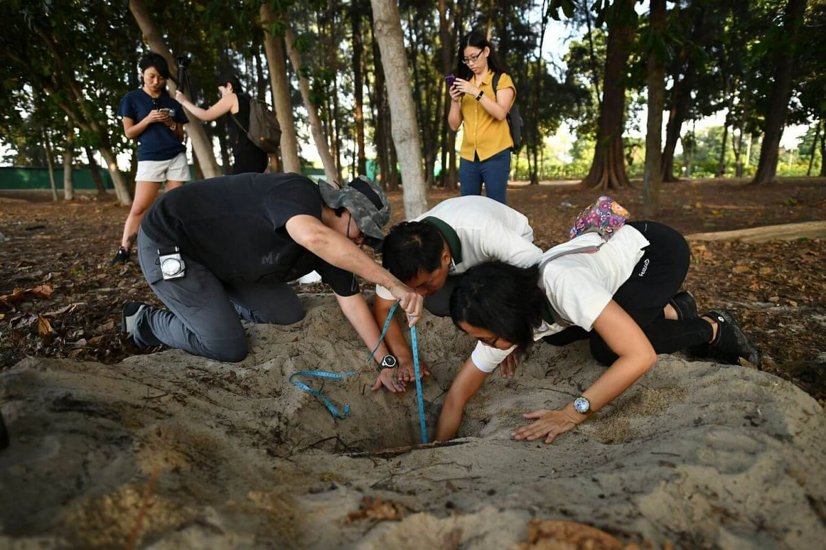 (From left) Ms Lisa Lim, NParks Volunteer; Mr Collin Tong, Senior Conservation Manager, NParks; and Ms Shirley Lee, NParks Volunteer; measuring the depth of the turtle nest at East Coast Park on Aug 21, 2019.